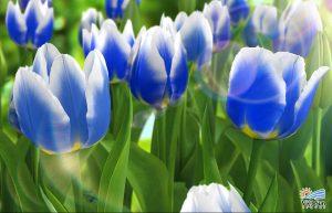 hoa-tulip-xanh